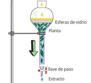 Percolación de plantas